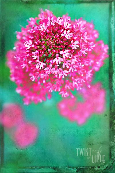 Pink Melting Pot