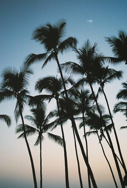 Hawaii-322.jpg