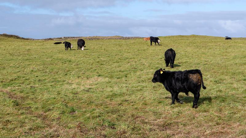 Ireland-Aran-Islands-Inishmore-35.jpg