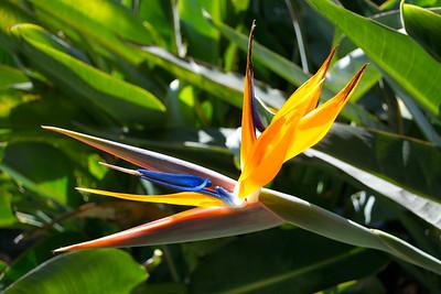Best of Flora