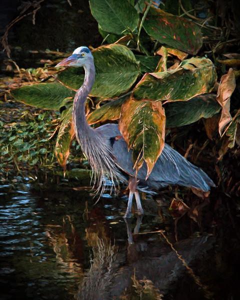 Artsy, Boynton Beach, Florida, Great Blue Heron, Wakodahatchee Wetlands