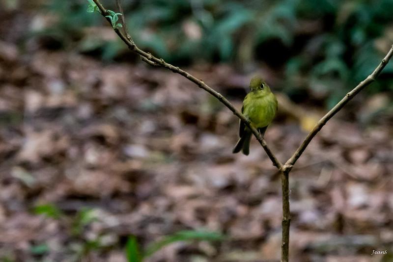 Oiseau - _MG_3552.jpg