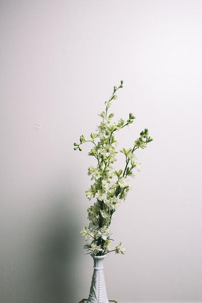 Meta Spring16.jpg