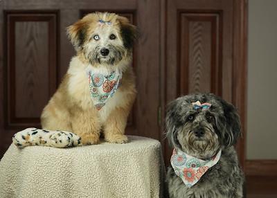Bailey and Cleo (2021-04-08)