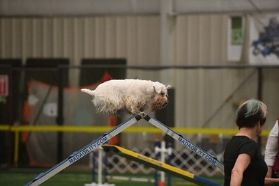 CCRCA Specialty AKC Agility & Obedience Trial May 28 & 30