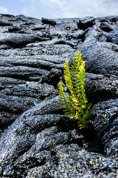 lava-8001.jpg