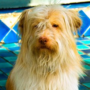 Soi Dog - Bangkok, Thailand