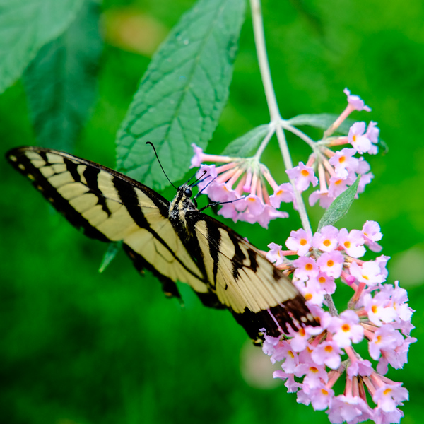 3.  At the butterfly bush