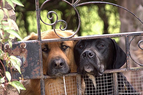 Dogs - Set 2