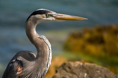 Clearwater Shore Birds