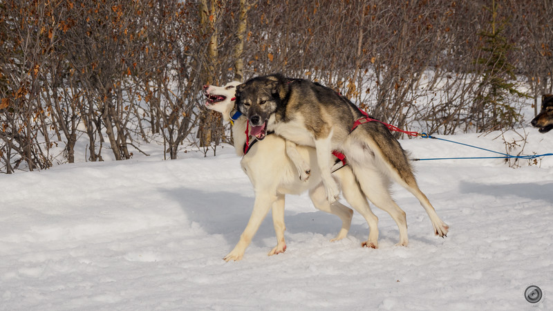 20190325_Blaire_and_Liz_Mushing_29.jpg