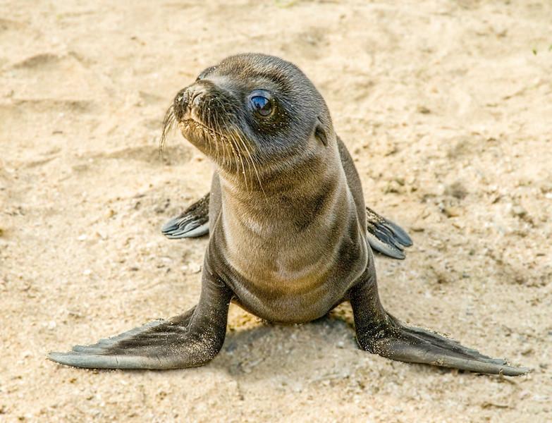 Galapagos_Sea Lions-18.jpg