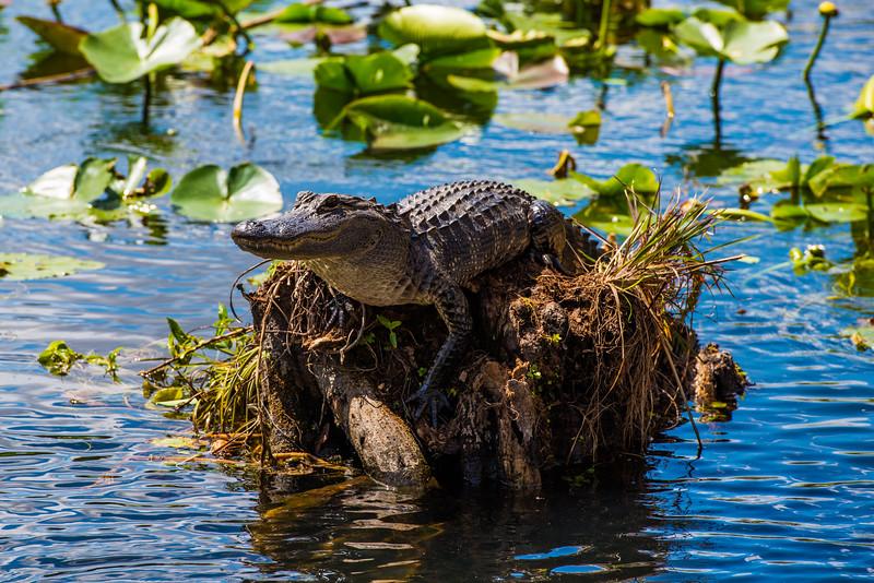 Everglades (32 of 60).jpg