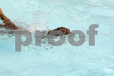 Dog Paddle IC 090809