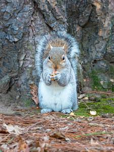 Squirrel sitting upright