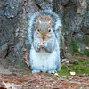 Squirrel sitting upright
