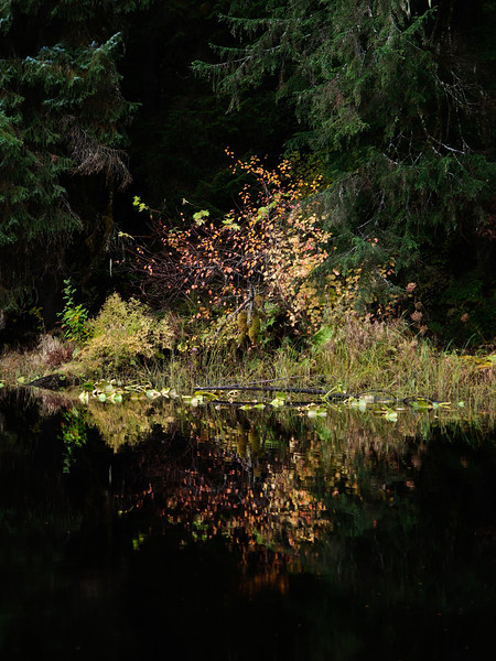 Auke Lake Color.jpg
