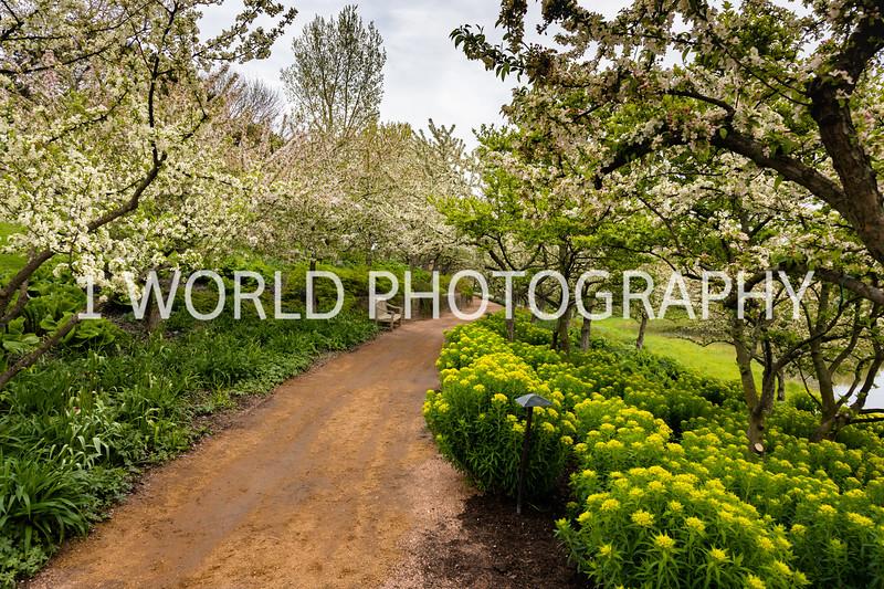 Chicago Botanic Garden Spring '17-209-4.jpg