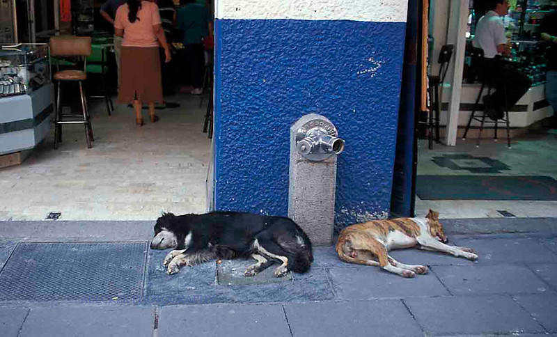 dogs at rest.jpg