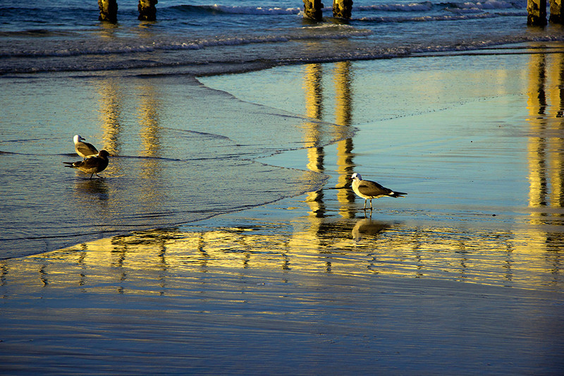 Birds Reflections