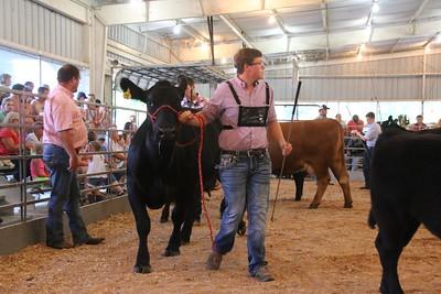 2016 Beef Show (county born & raised)