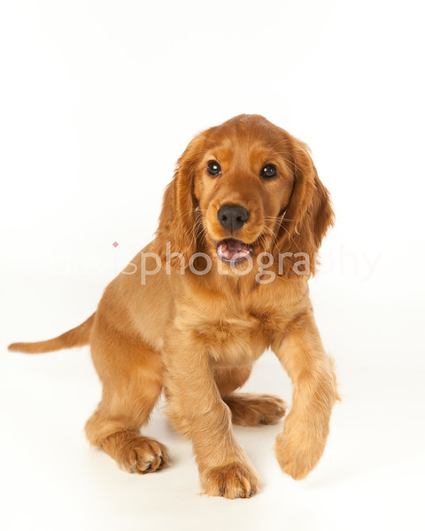 Finlay the Puppy