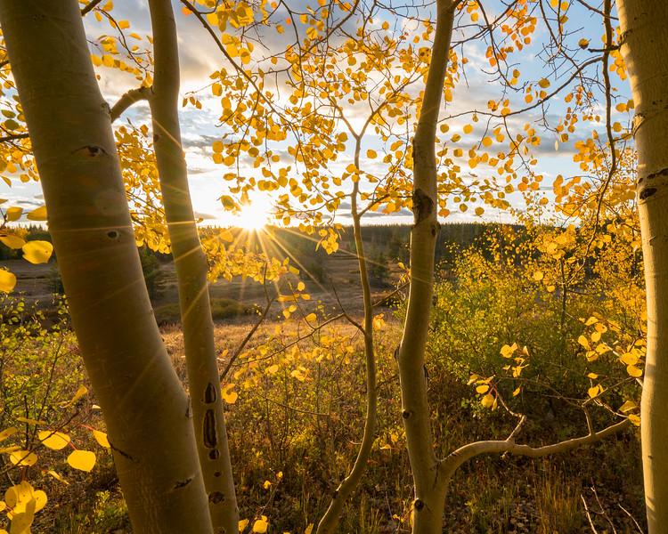 Steamboat Springs Fall Color Fade-3.jpg