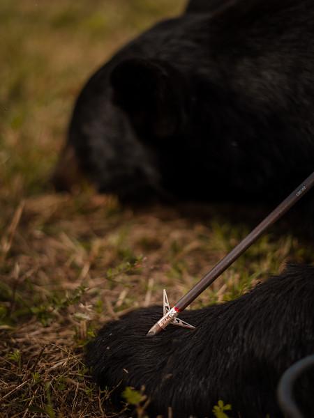 Jimmy - 2020 Crossbow Bear