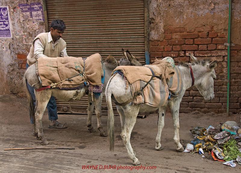 INDIA2010-0130-59A.jpg