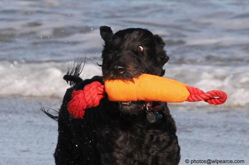 Memo at the Beach