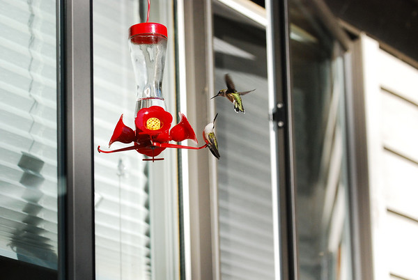 Hummingbirds at Grandma's 9-30-07