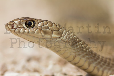 Snakes - Stock Photos