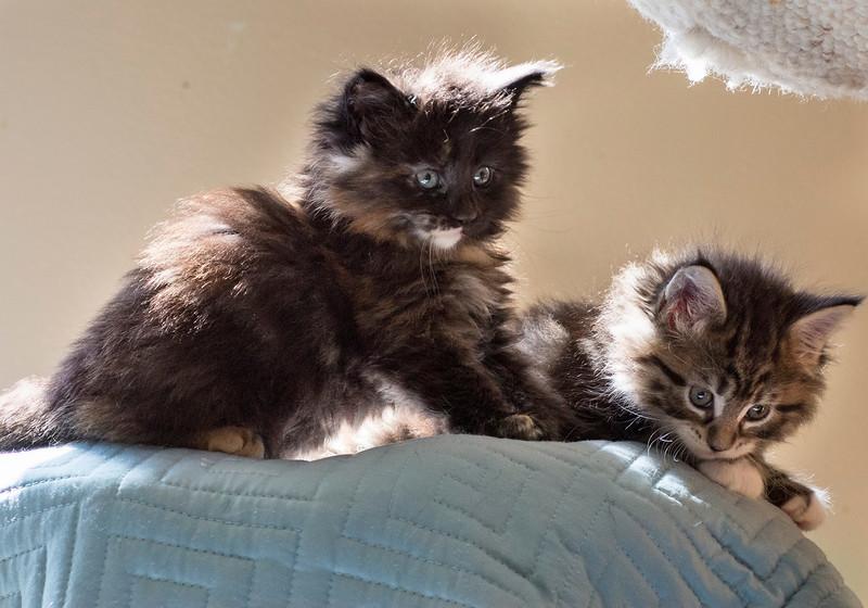 Kittens229.jpg
