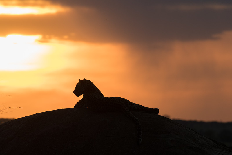 Africa  - 101016- 234-Edit.jpg