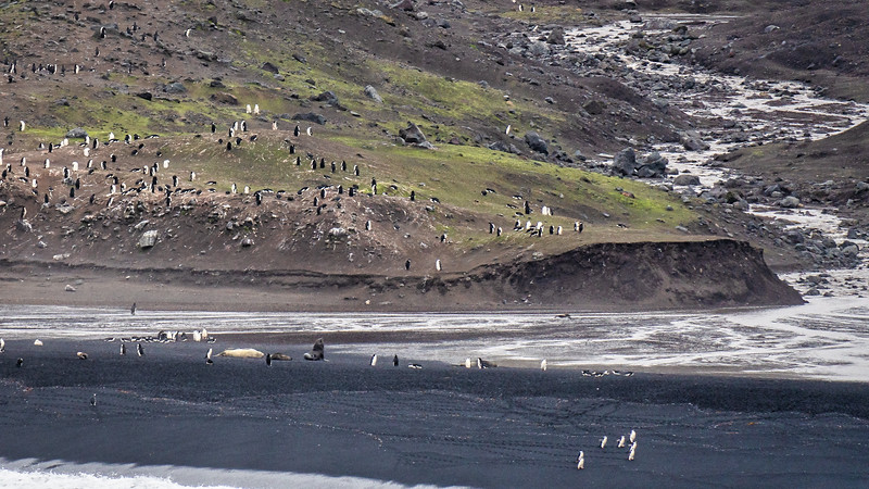Baily Head Chinstrap Penguin Colony