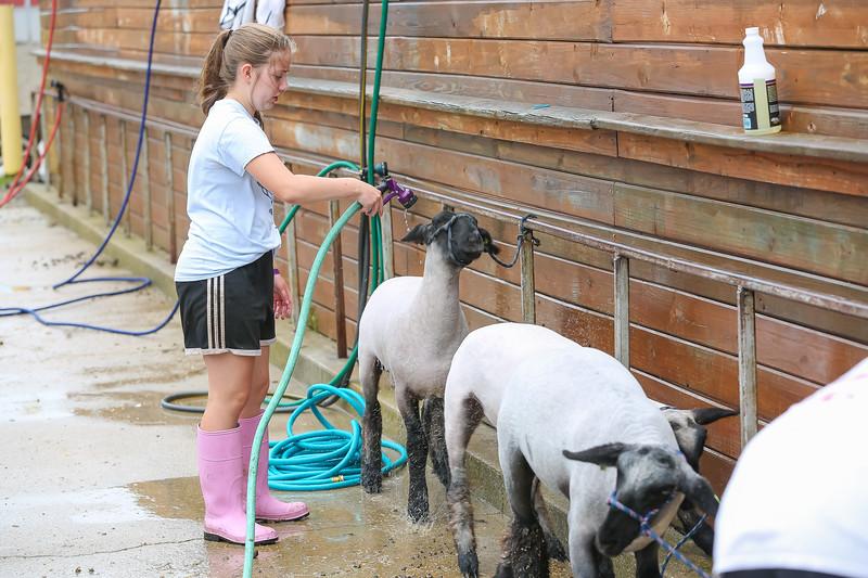 Sheep Show-23.jpg