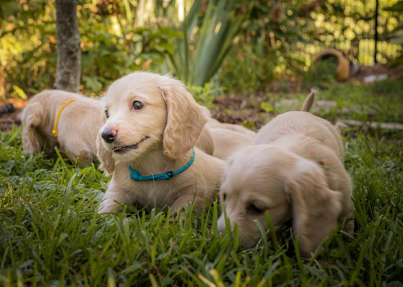 Crout Pups July-2020-416.jpg