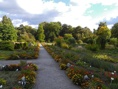 Botanic Garden Cracow summer 2013