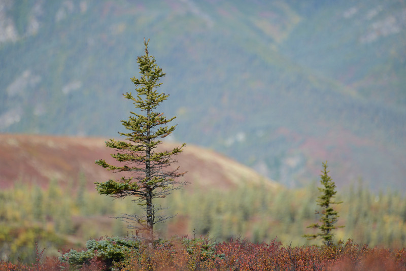 Alaska Fall 2013 - 180.jpg