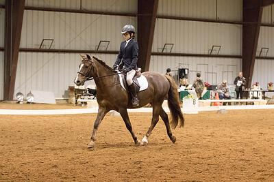 Horse 639