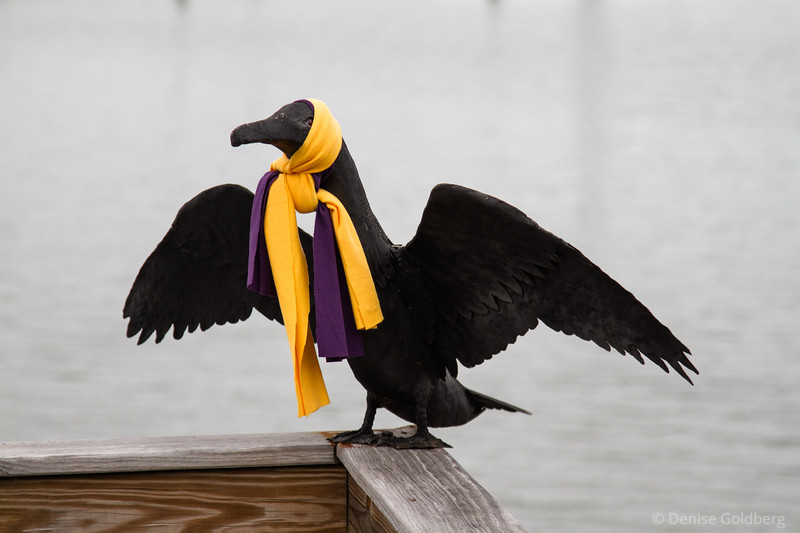 sculpture of a cormorant, dressed for winter