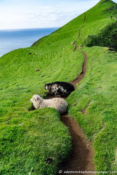 Faroe-islands-3.jpg