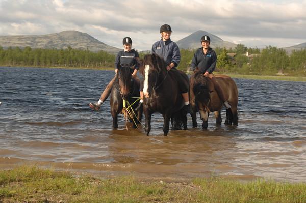 Horses at Venabu