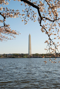 Cherry Blossoms 2010