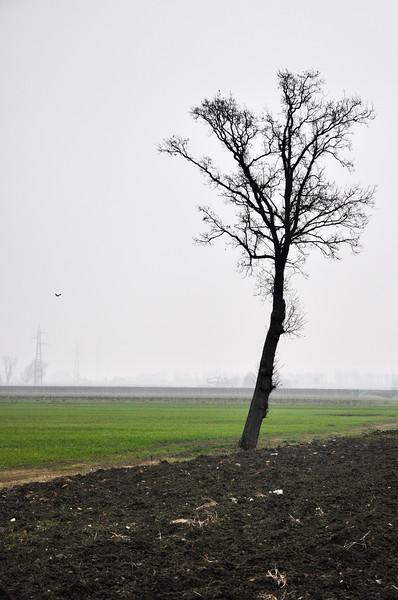 Naked Tree - Albareto, Modena, Italy - January 15, 2010