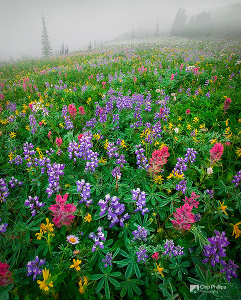 """Mount Rainier Wildflowers""