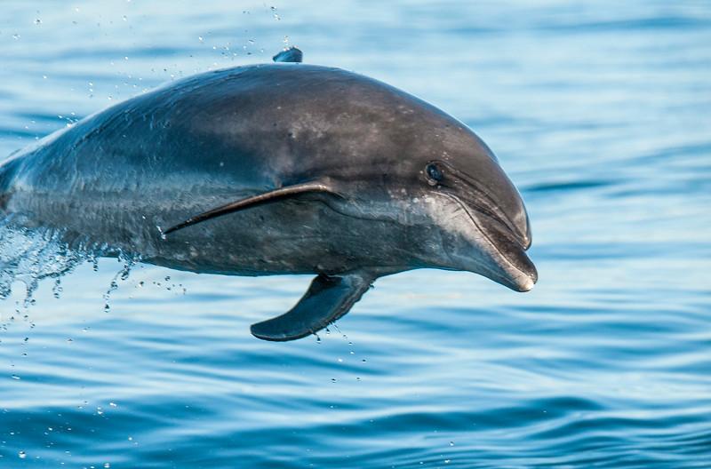 Dolphin-5.jpg