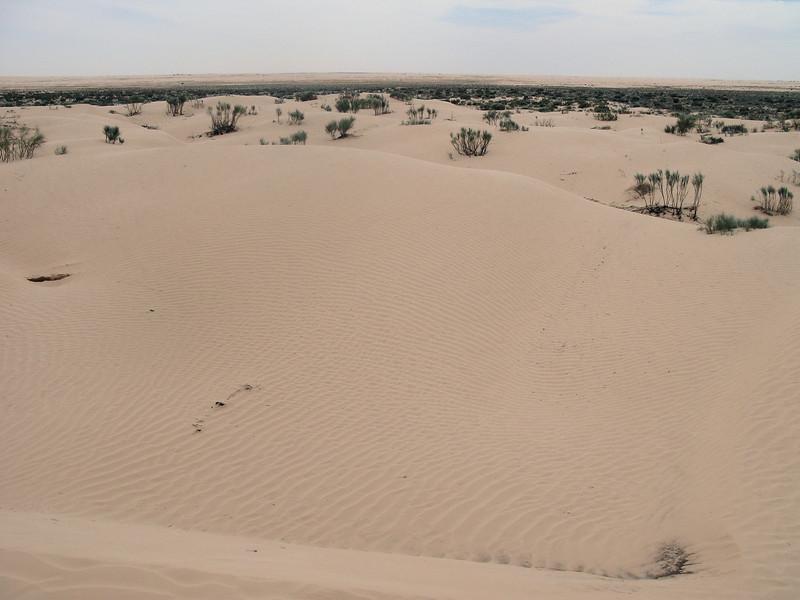 Cross Ripples on Dunes