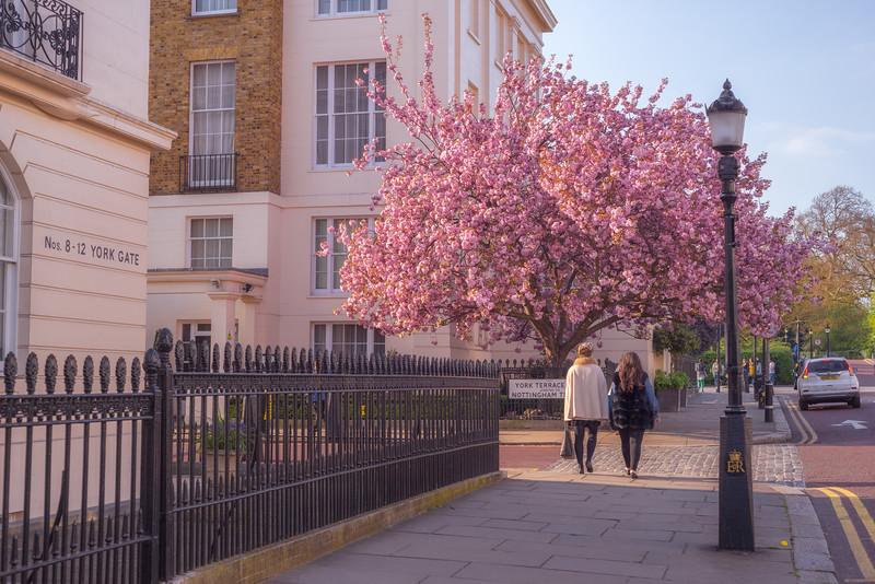 Regent-Park-Cherry-Blossom.jpg