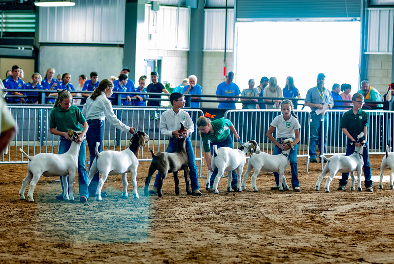 Tulsa_2019_goat_wether_showmanship-13.jpg